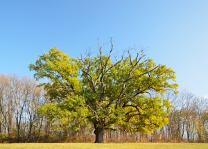 Tree Care by Qualified Tree Surgeons