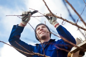 Free Tree & Hedge Consultatons - Free Advice