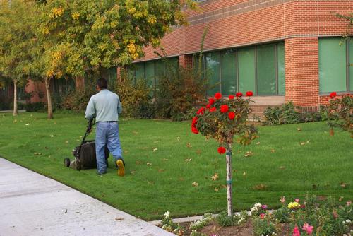 Grounds Maintenance Services