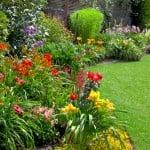 gardening advice, gardening tips, local