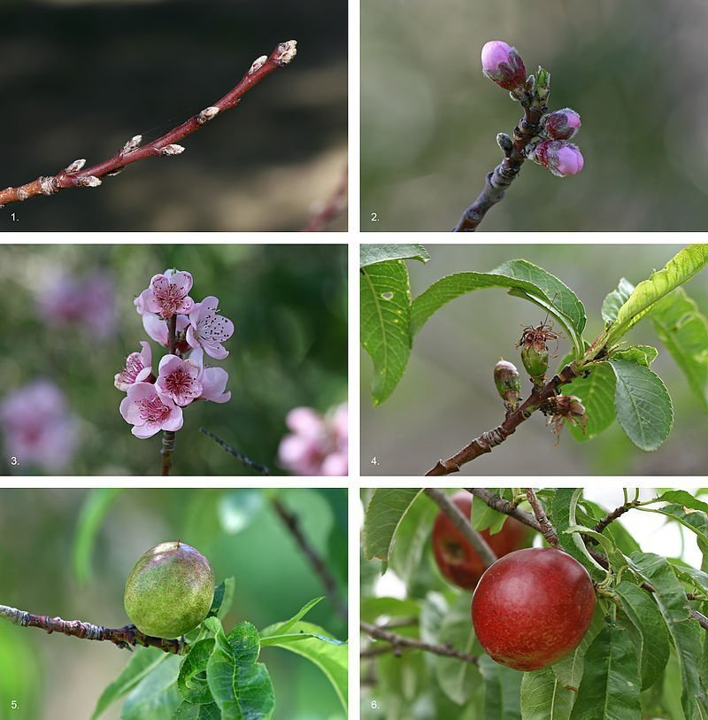 How to Grow Better Fruit Bearing Trees