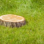 Tree Stump Removal Services